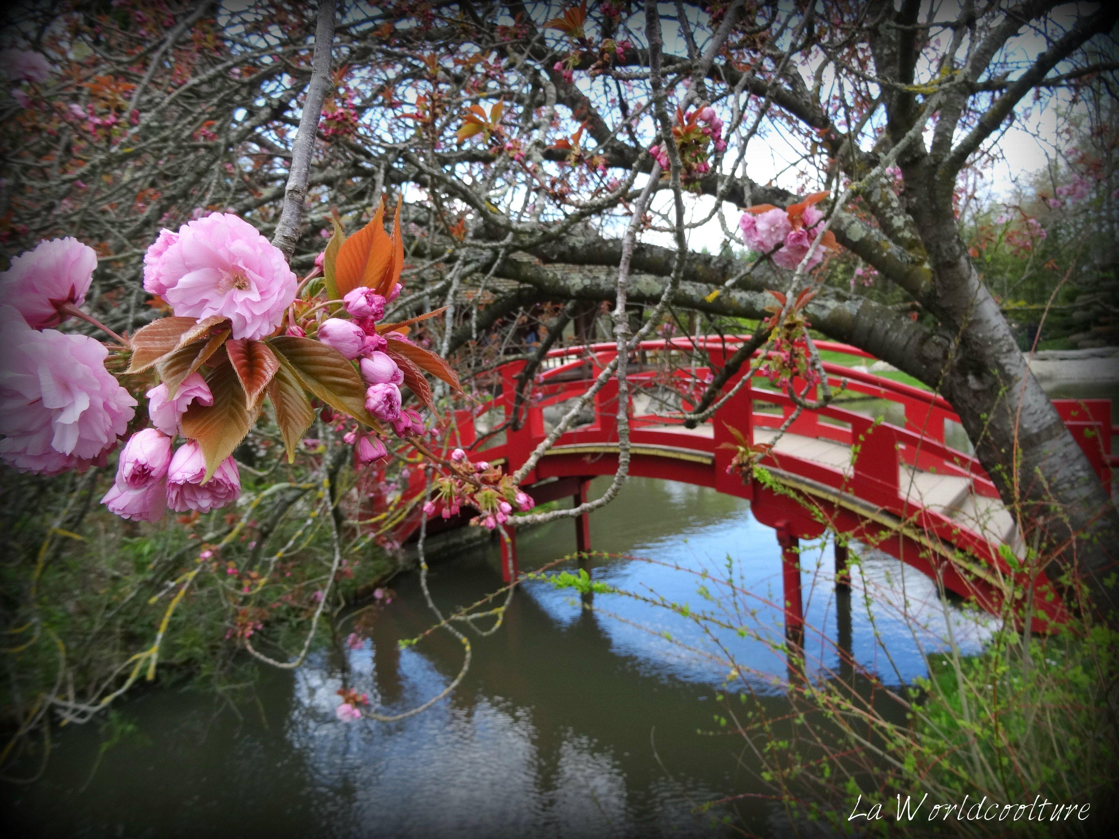 Le printemps arrive au jardin japonais de toulouse for Le jardin japonais toulouse