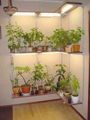 Indoor Lighting For Tropical Plants Https Toptropicals Com Html