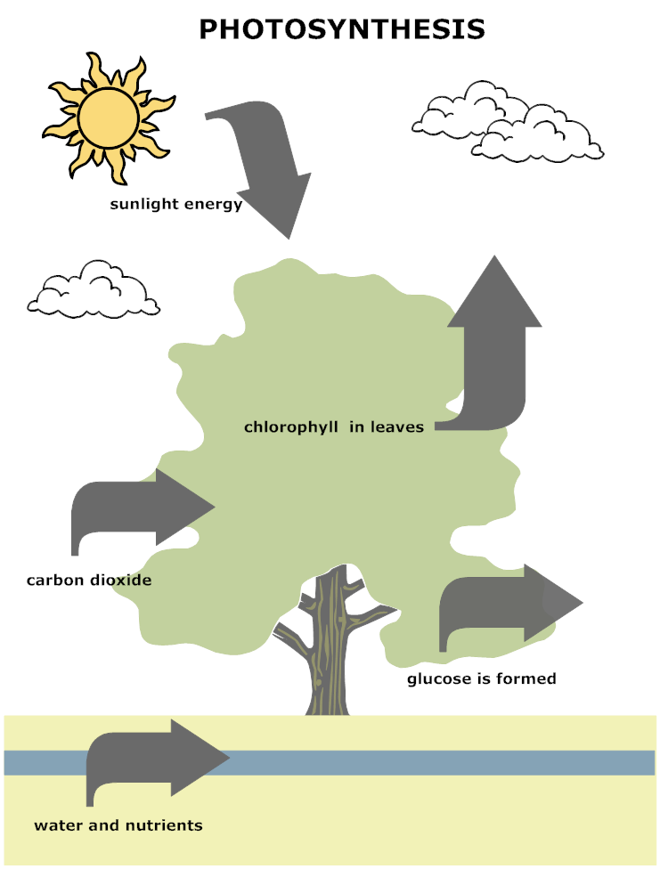 example image photosynthesis diagram anatomy biology pinterest photosynthesis and diagram. Black Bedroom Furniture Sets. Home Design Ideas