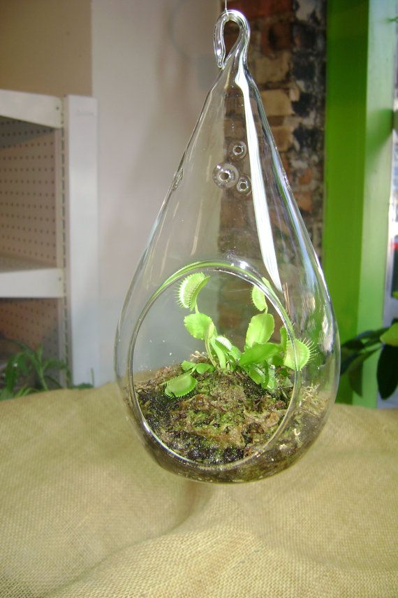 Venus Fly Trap Terrarium By Graciebellasboutique On Etsy 20 00