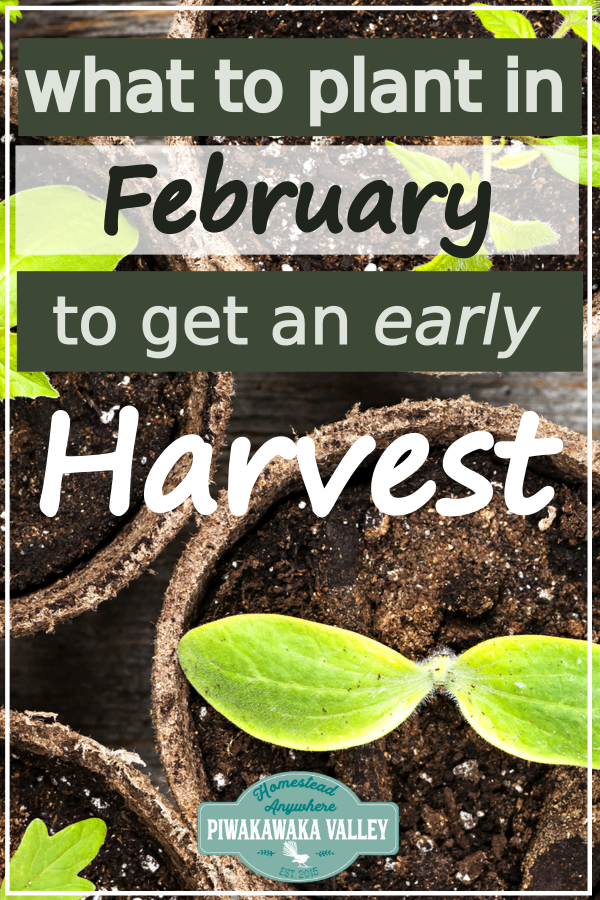 What to Plant in your Winter Vegetable Garden in February (or August!) #wintergardening