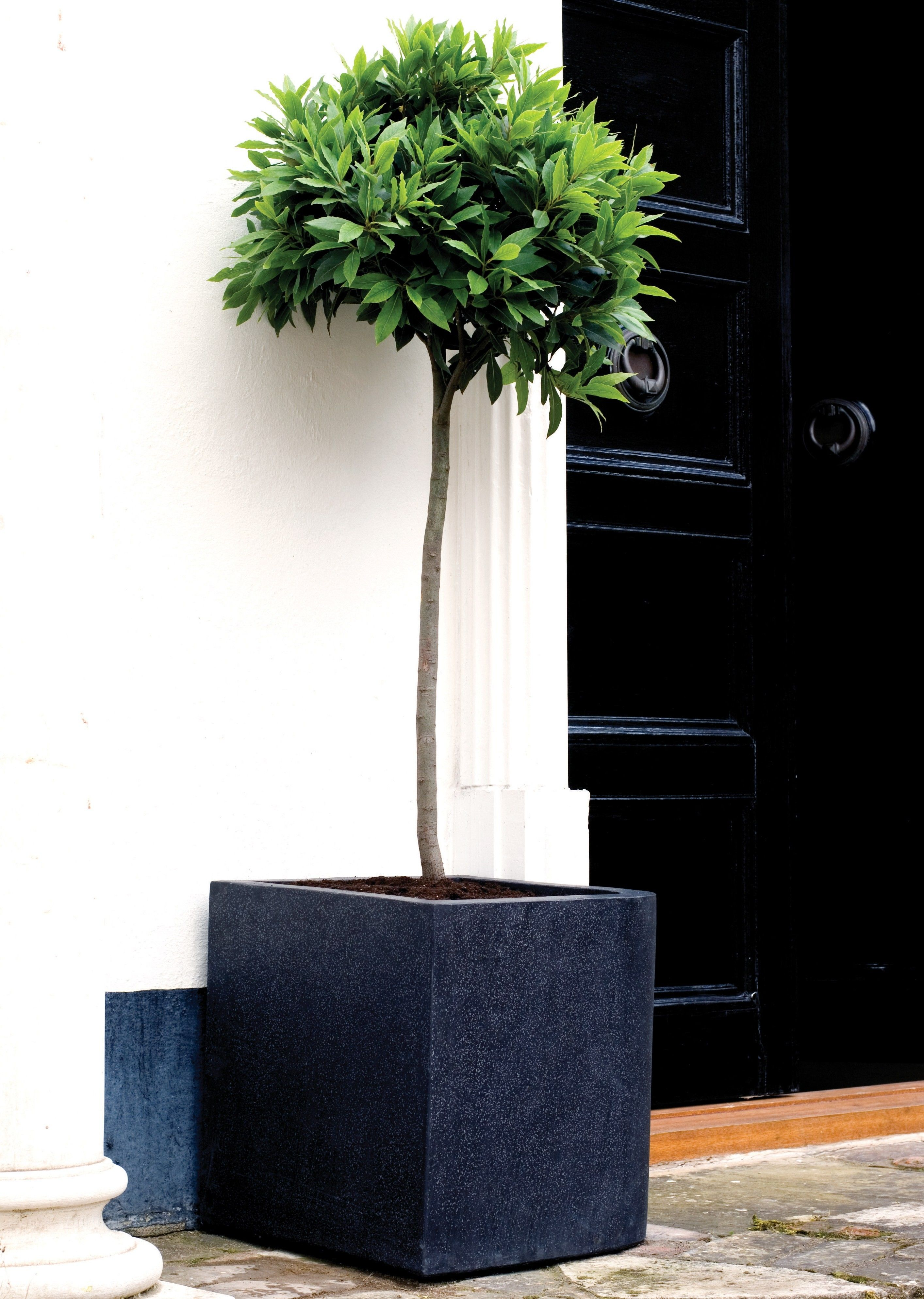 Door Planter Black Square Planter Square Planters Door 400 x 300