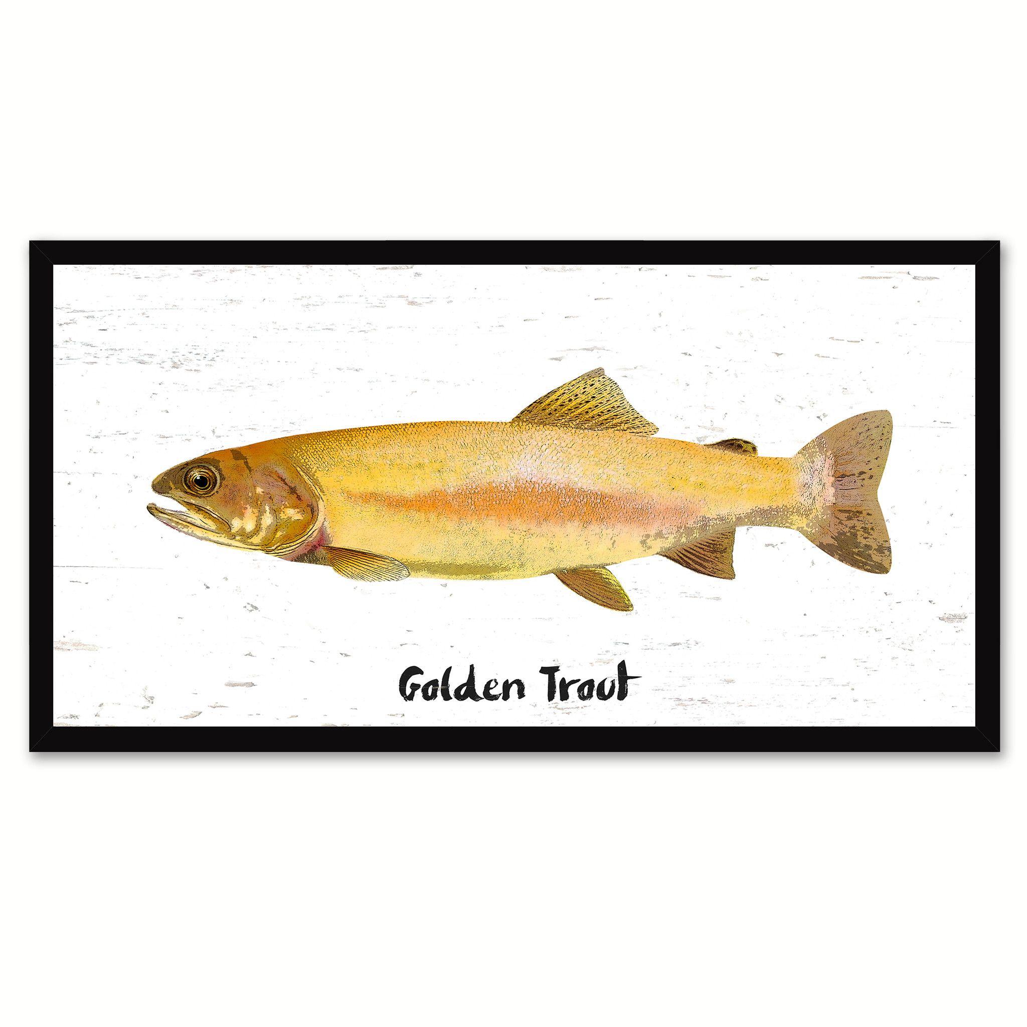 Golden Trout Fish Painting Reproduction Canvas Print Picture ...