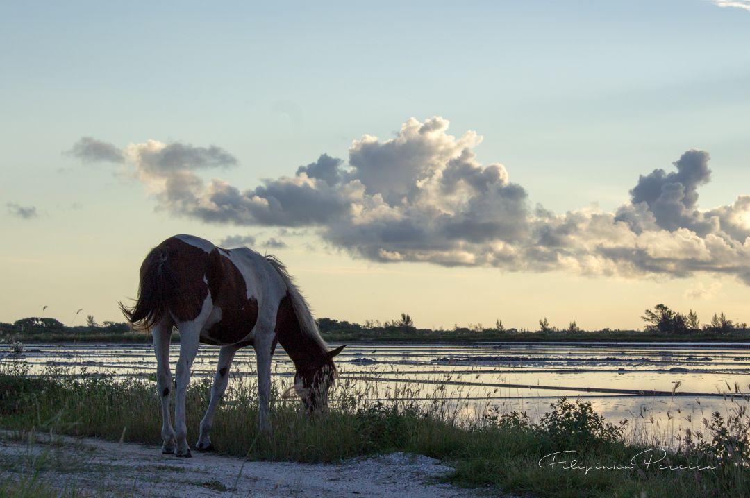Cavalo Comendo Na Beira Da Salina Cavalo Exposicao