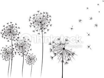 Fleur De Pissenlit Photos Et Illustrations Images Libres De