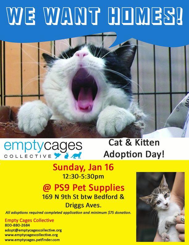 Jan 16 Flyer Copy Jpg 612 792 Pixels Animal Rescue Cat Adoption Shelter Dogs