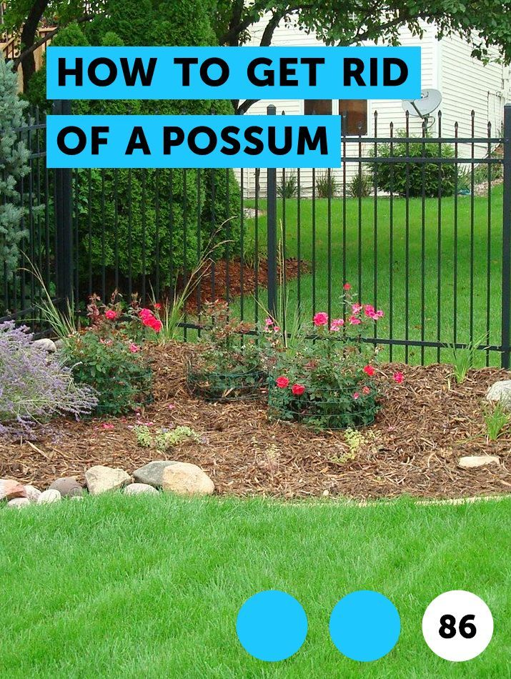 How to Get Rid of a Possum   Natural bee repellent, Bee ...