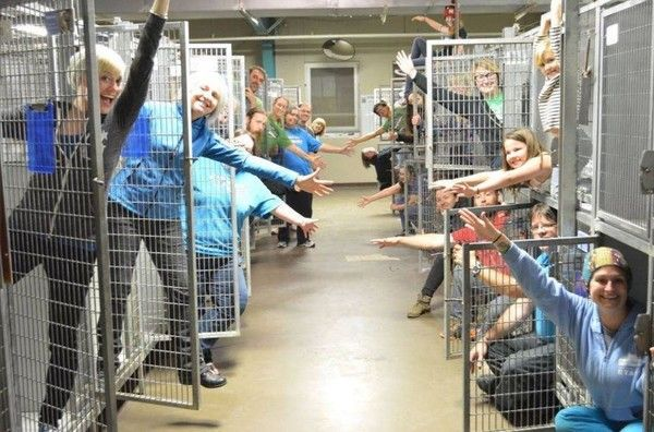 Happiest Shelter Photo Shows No Dogs At All