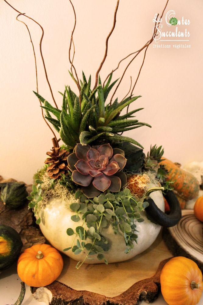 la citrouille et la coloquinte composition de plantes grasses et coloquinte sur un potiron. Black Bedroom Furniture Sets. Home Design Ideas