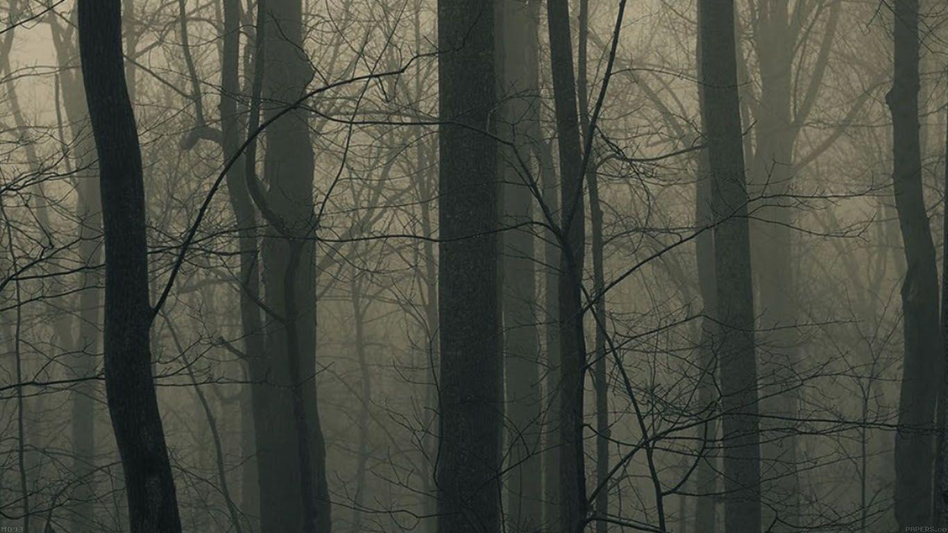 Good Wallpaper Macbook Forest - b0b552d86d2261d0e79ead206a1b2bfd  Picture_737044.jpg
