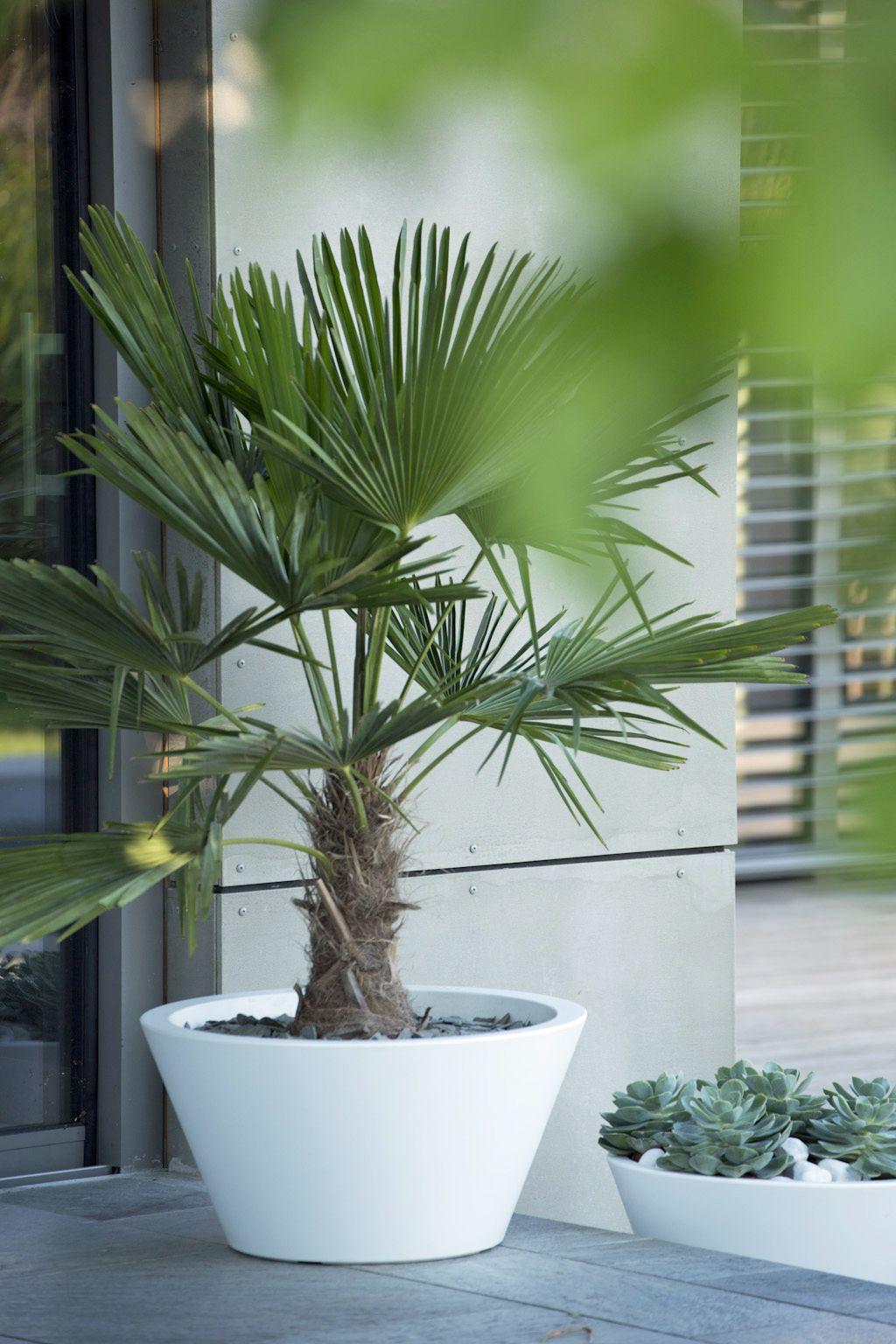 Pot Elho Ultra Leger Resistant Au Gel Ideal Pour Votre Terrasse