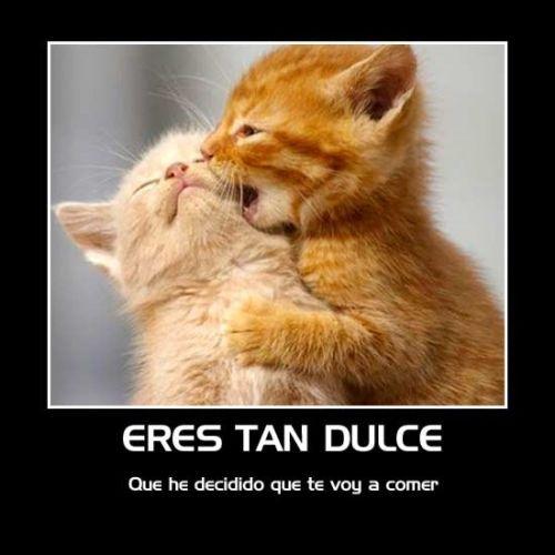 Imagenes Tiernas De Animales Con Frases De Amor Imagenes De Amor