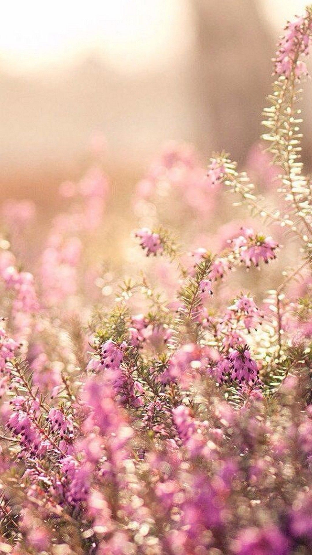 Cute Spring Iphone Wallpaper 2018 Iphone Wallpapers