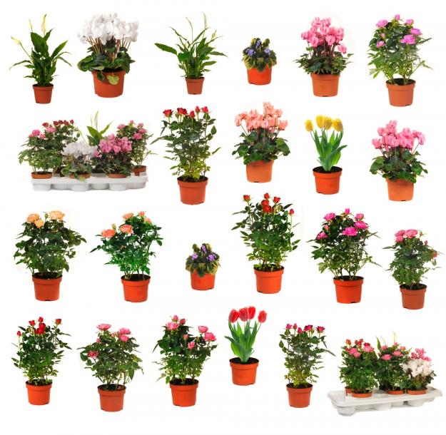 Plantas de interior que florecen todo el a o plantas for Plantas de jardin interior