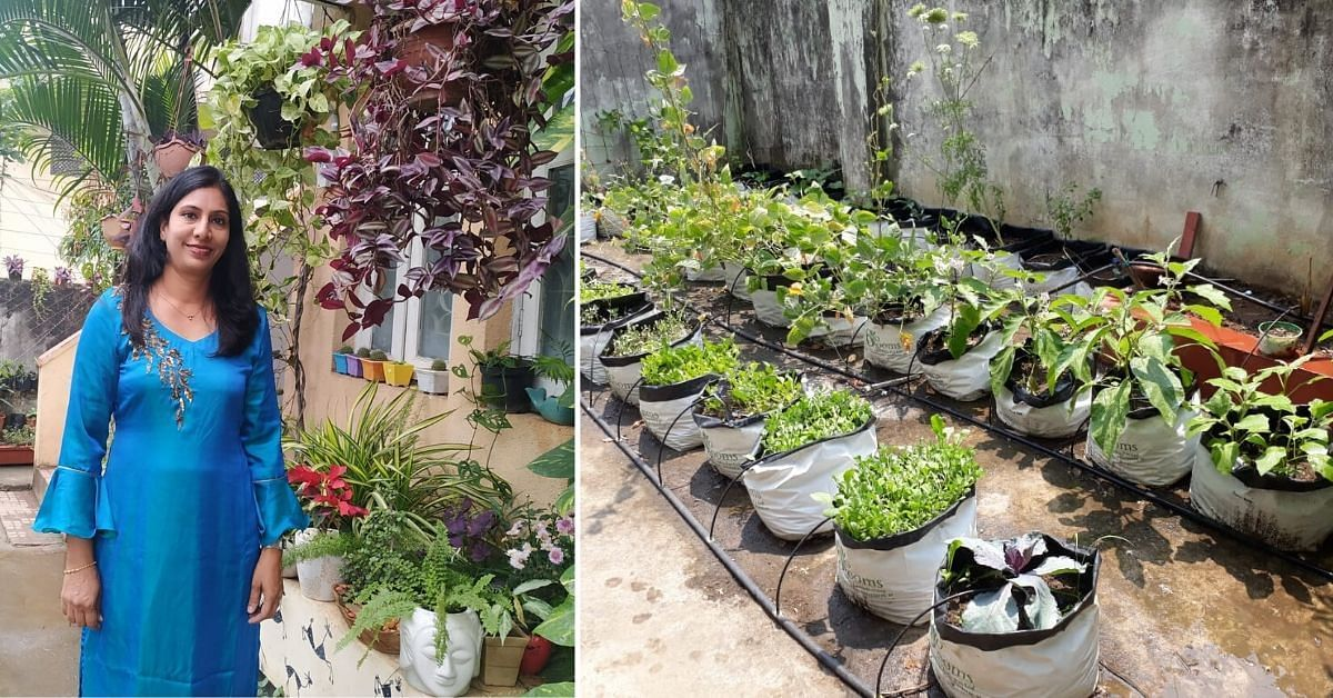 Homemaker Shares How To Grow Your Own Fruit Trees In 2021 Fruit Trees Organic Compost Healthy Plants