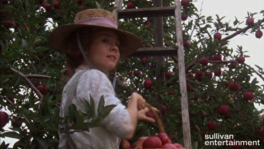 Apples Anne