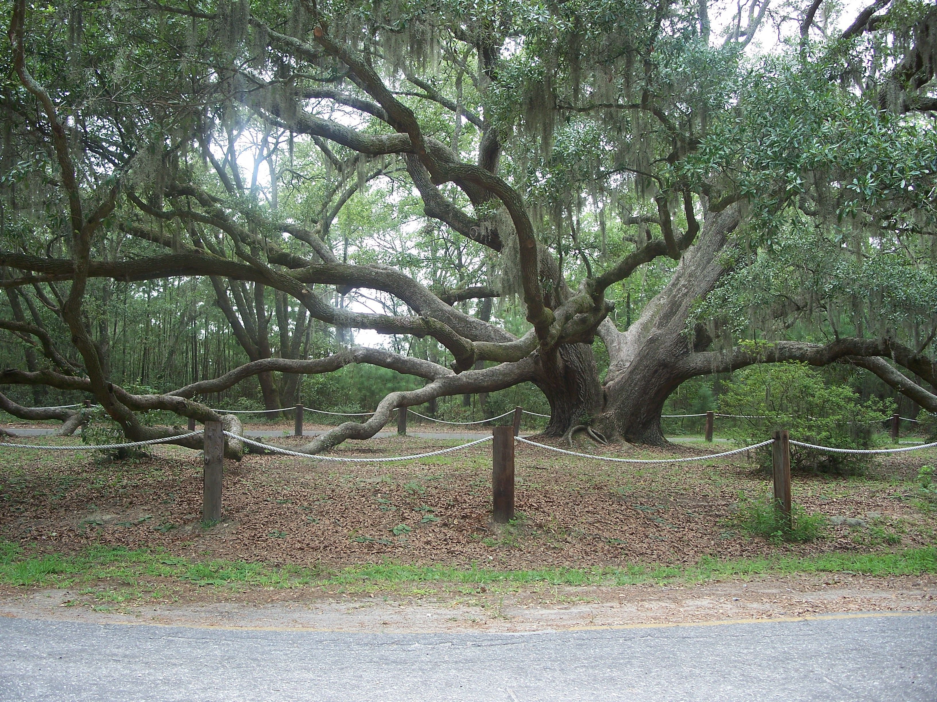 tree in the movie forrest gump beaufort sc my travels