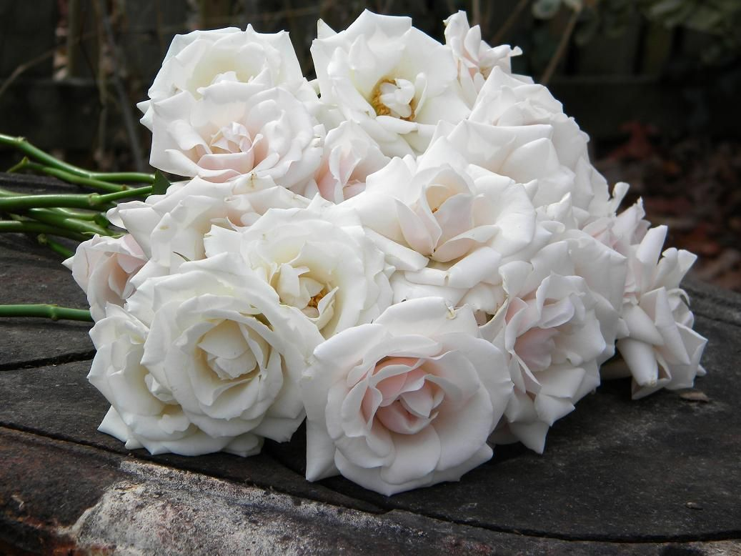 white majolica spray rose | White and Blush Wedding Centerpieces ...