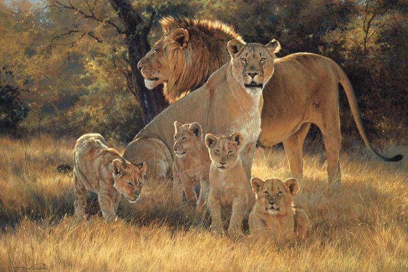 """Résultat de recherche d'images pour """"lions famille"""""""