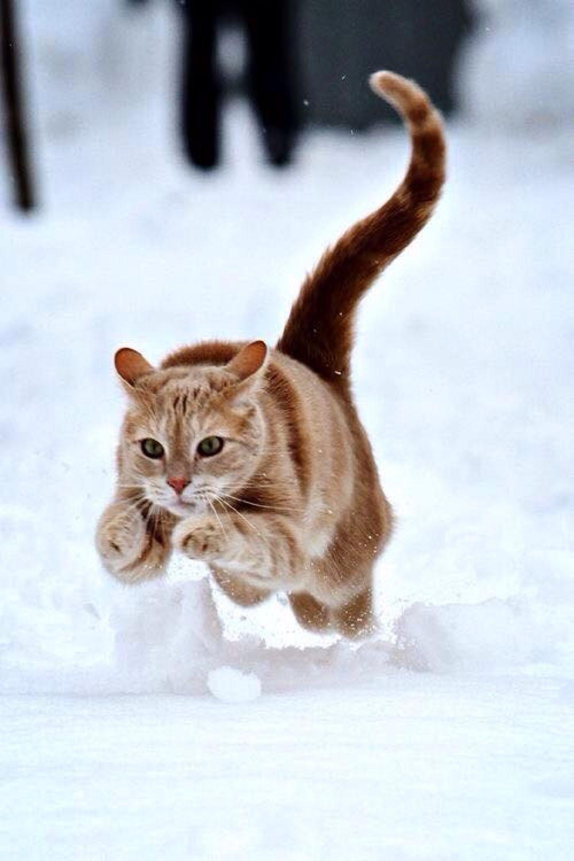Hello Moment S Katzen Tierbabys Bilder Susse Katzen Bilder