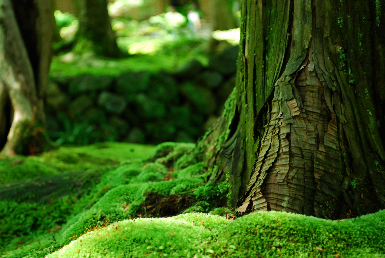 Moss Forest Wallpaper Nature Tree Green Nature Moss Plant
