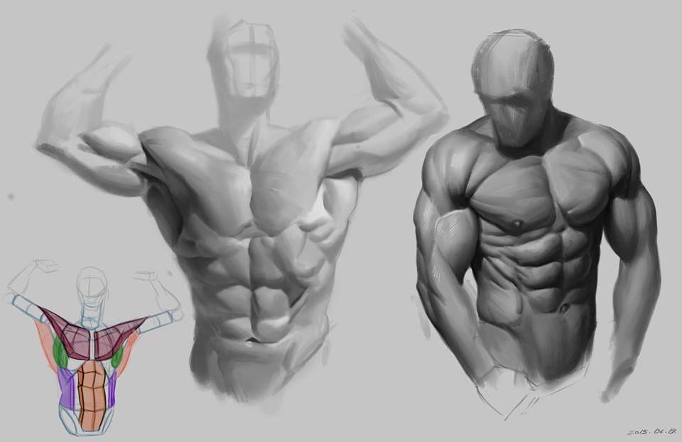 torso studies | MAN | Pinterest | Anatomy