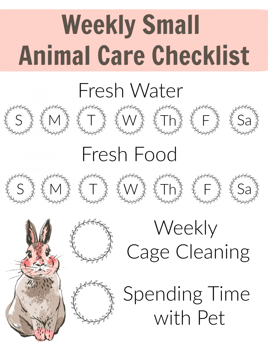 Teaching Children To Care For Their Small Animal Pet Thrifty Nifty Mommy Small Pets Pet Rabbit Care Pets