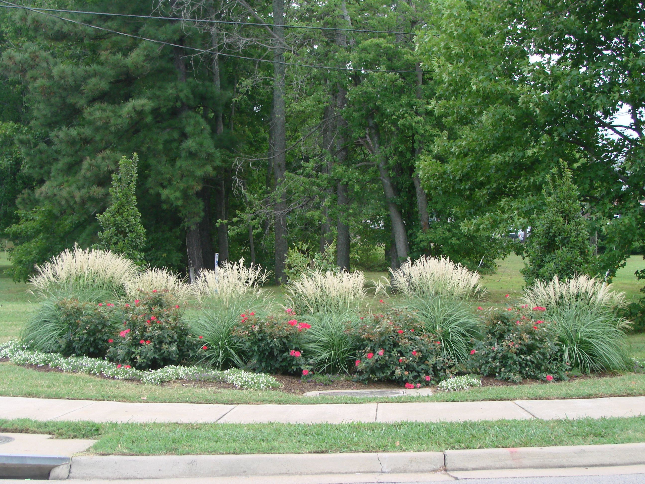 Miscanthus adagio is a wonderful companion plant to for Grass bushes landscaping