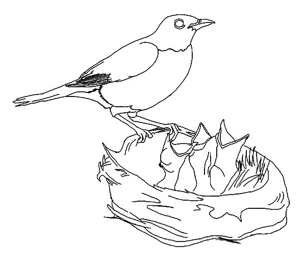 Hungry Baby Bird In Bird Nest Coloring Pages Best Place To Color Baby Coloring Pages Bird Coloring Pages Online Coloring Pages