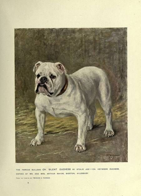 Published in 1907, this gorgeously illustrated volume offers a comprehensive guide to breeds popular at the turn of the 20th century, with a brief but vivid history of the dog and a survey of the dog in history, art and literature. Each breed description is chock full of historical tidbits (we learn, for instance, that[...]