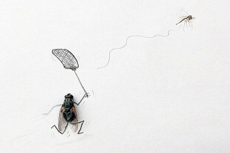 Картинка муха смешная, смешные чукча