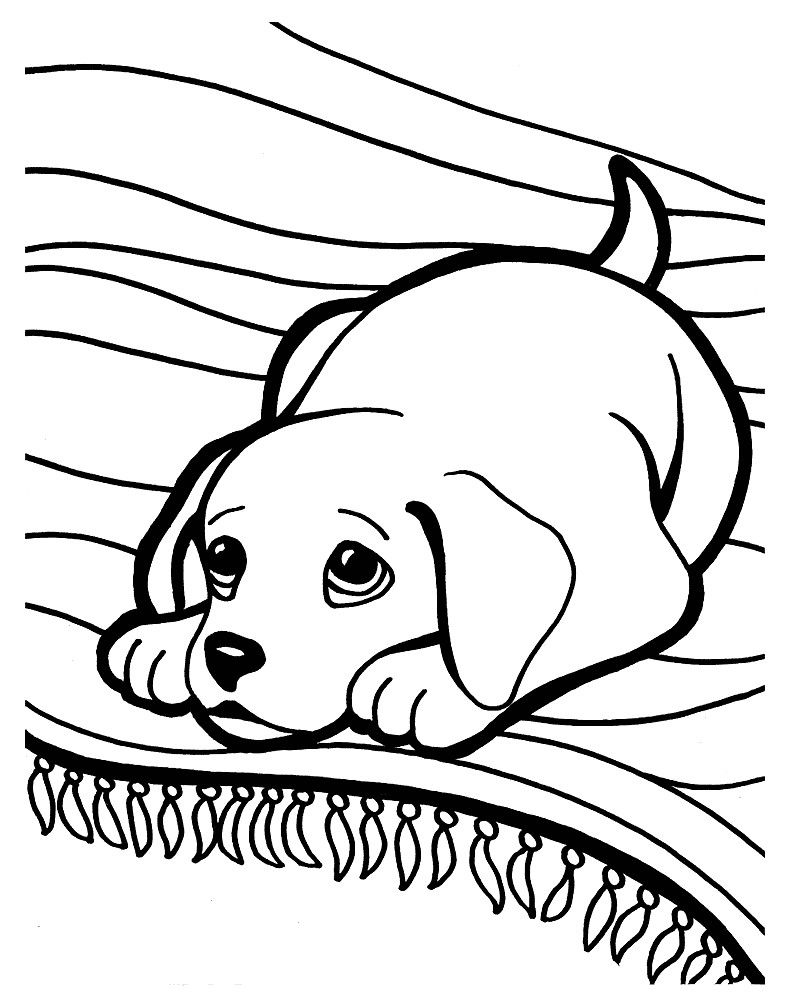 4 Golden Retriever Coloring Pages Puppy Coloring Pages