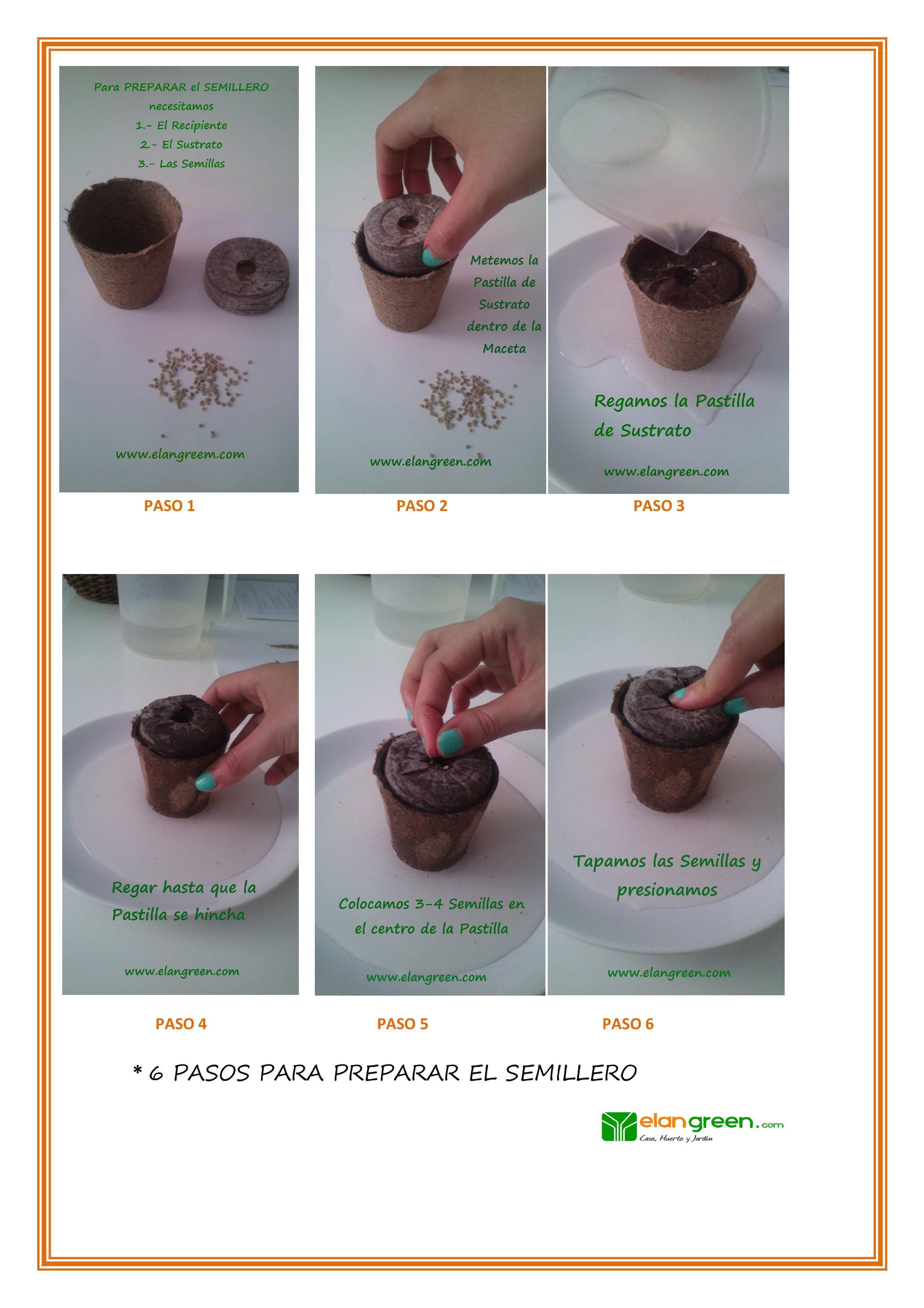 pasos para sembrar una semilla