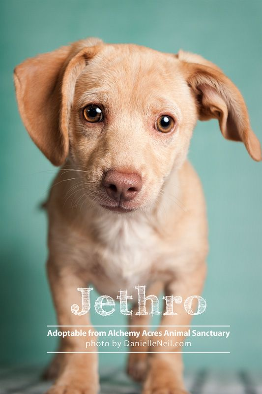 Jethro Is Up For Adoption Through Alchemy Acres Www Alchemyacres Org In Salem Ohio Shelter Dog Photography Pet Photographer Pets