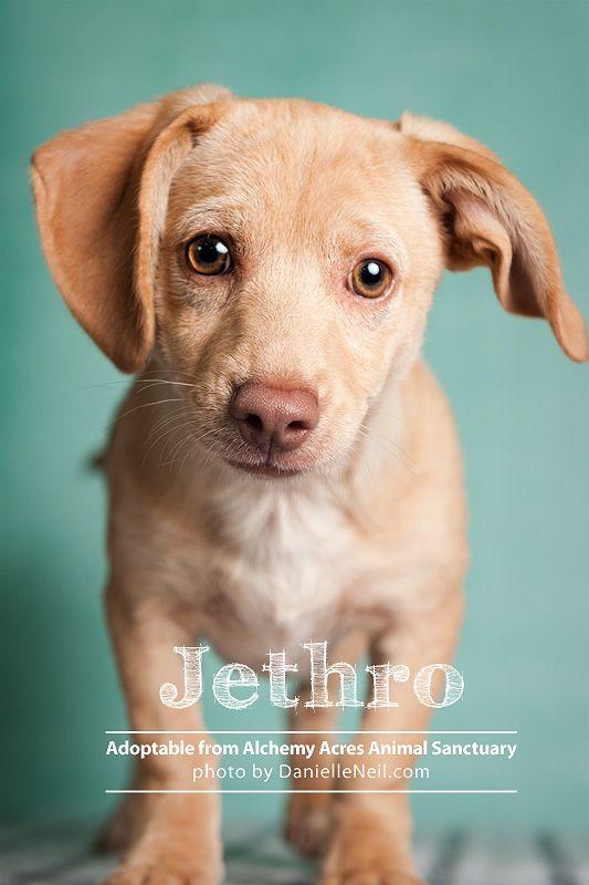 Jethro Is Up For Adoption Through Alchemy Acres Www Alchemyacres