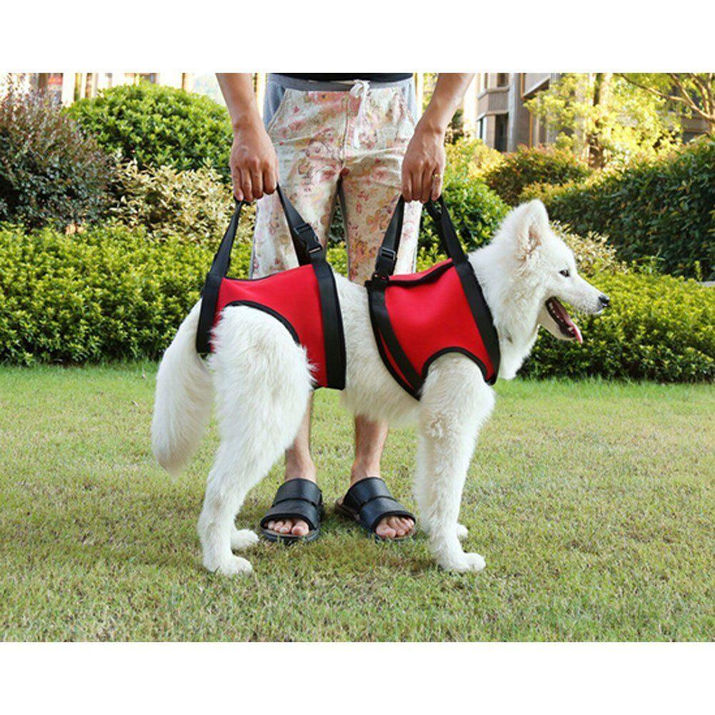 Fullsize Of Best Harness For Dogs