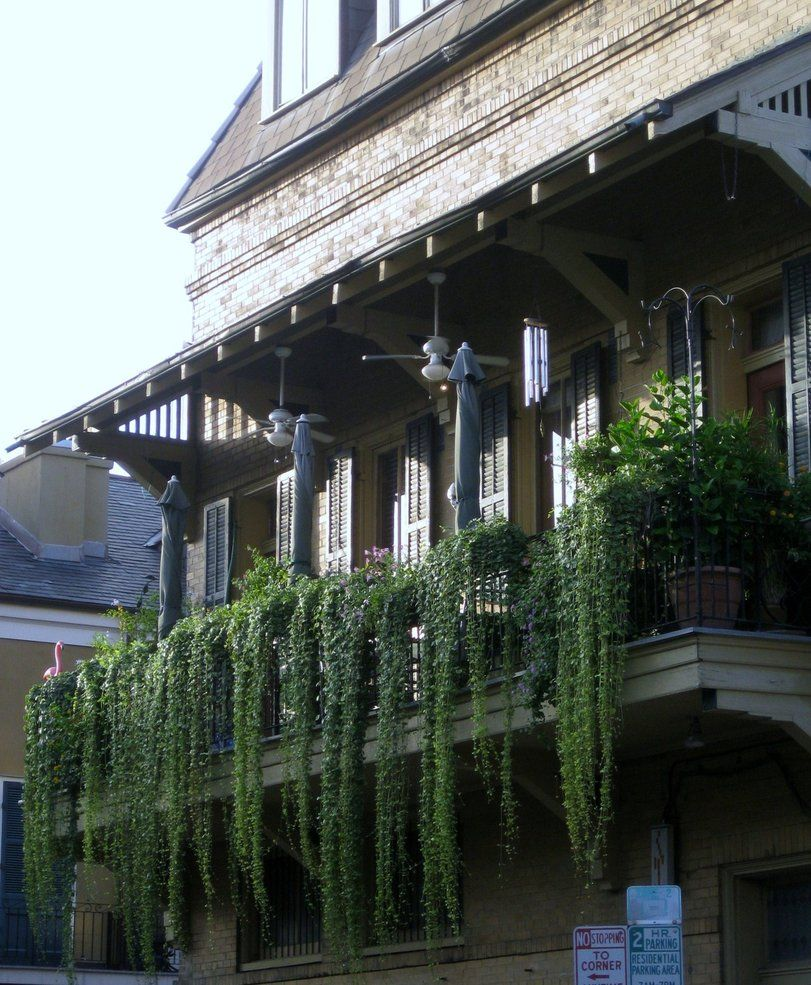 Hanging Vines From Balcony