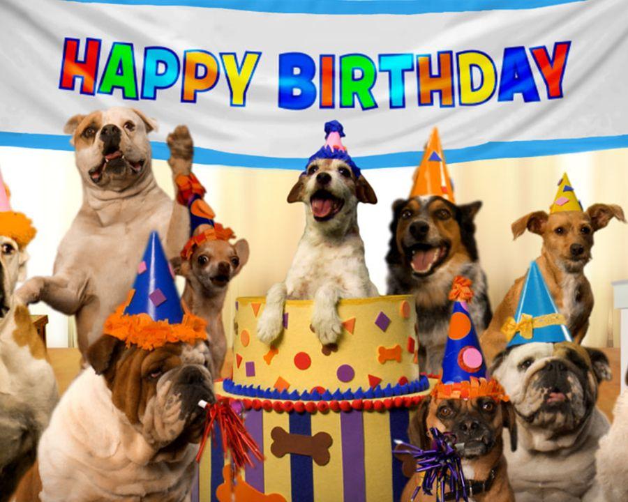 Prairie Dog Birthday Song Video Ecard Personalize Lyrics Birthday Ecard Blue Mountain Ecards Birthday Card Online Birthday Songs Birthday Ecards
