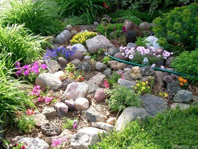 steingarten gestaltungsideen petunien veilchen mulch | florian, Hause und Garten