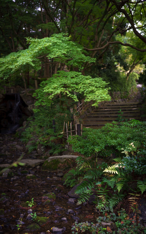 円山公園 maruyama park KYOTO JAPAN