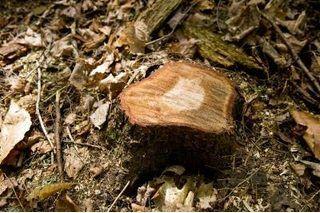 Epsom Salt Formula For Stump Removal Ehow Stump Removal Tree Stump Kill Tree Stump