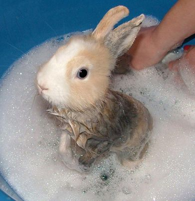 11 Animals Taking Bubble Baths Cute Baby Animals Baby Animals