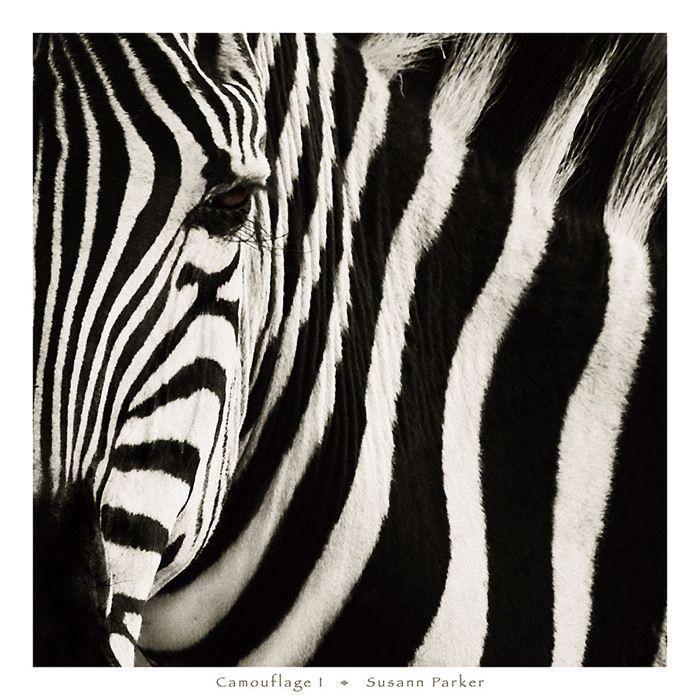Camouflage Framed Print | <3 | Pinterest