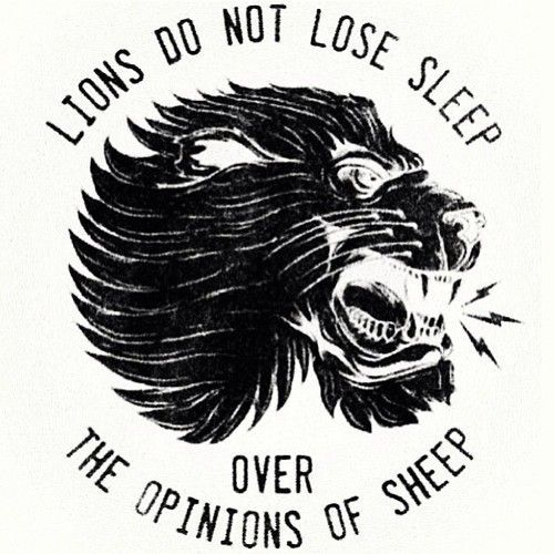 Lions Don T Lose Sleep Over The Opinion Of Sheep With Images