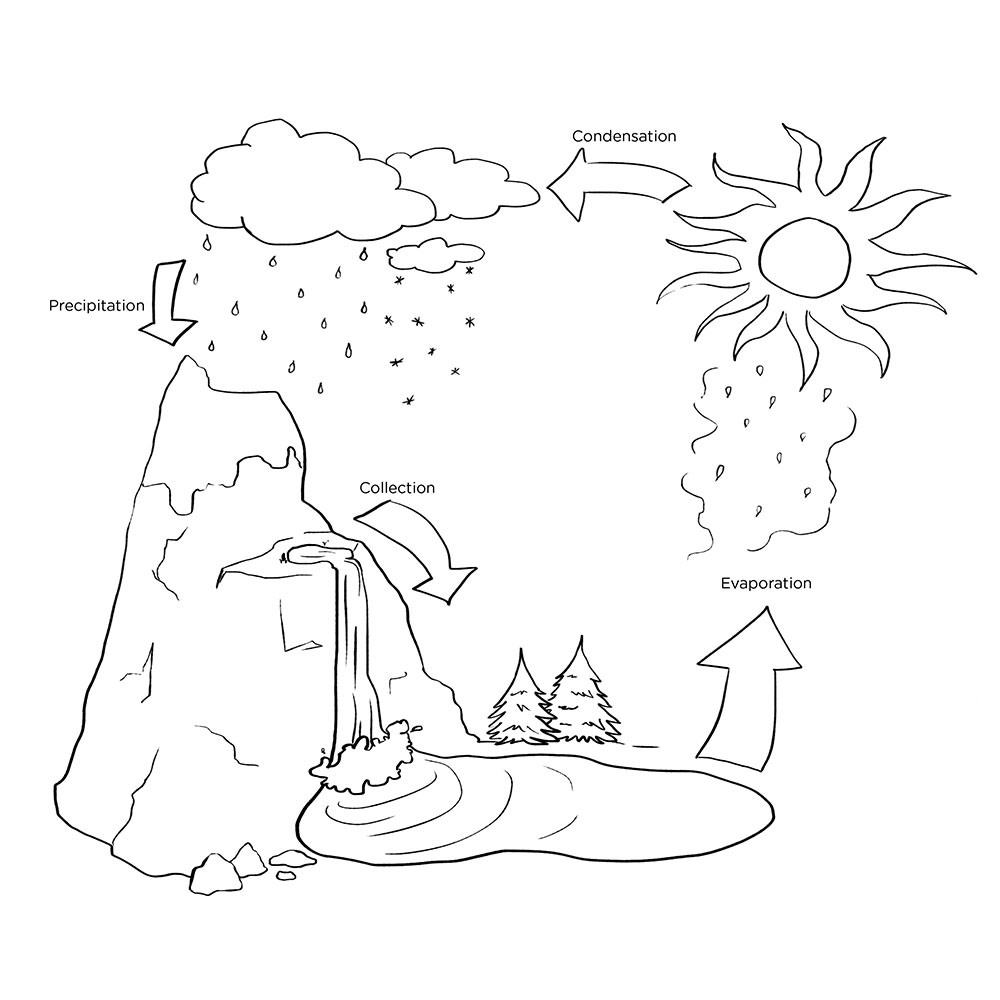 Activities Water Cycle Coloring Page Owl coloring