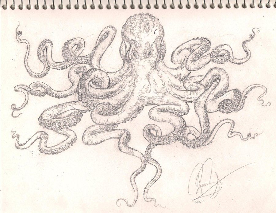 octopus sleeve tattoo drawing pictures Octopus Drawings Tattoos