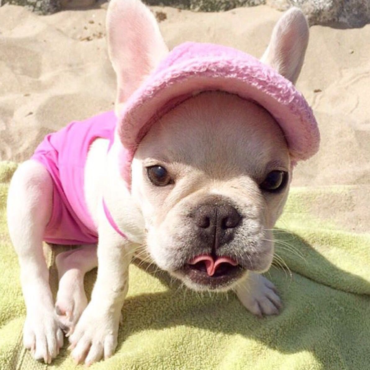 Frenchie Love Baby Dogs Cute French Bulldog Brindle Boxer