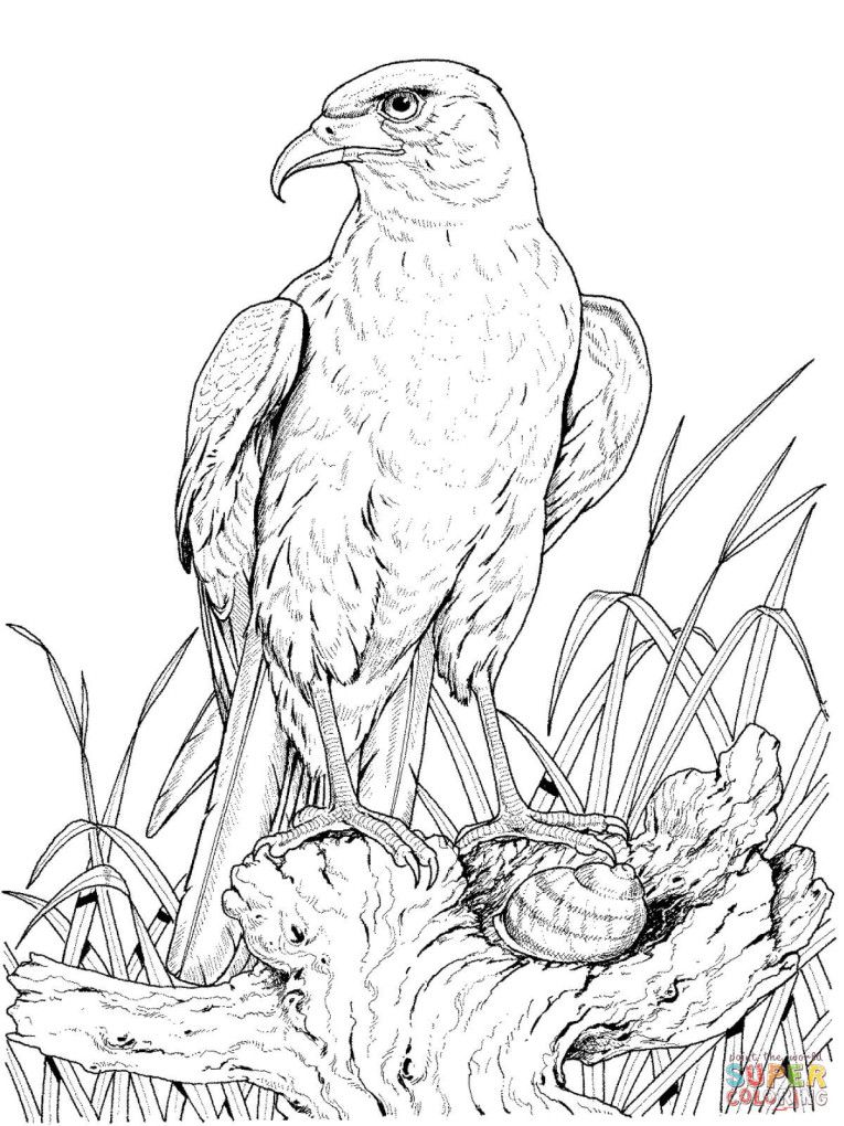 Perched Golden Eagle Coloring Page
