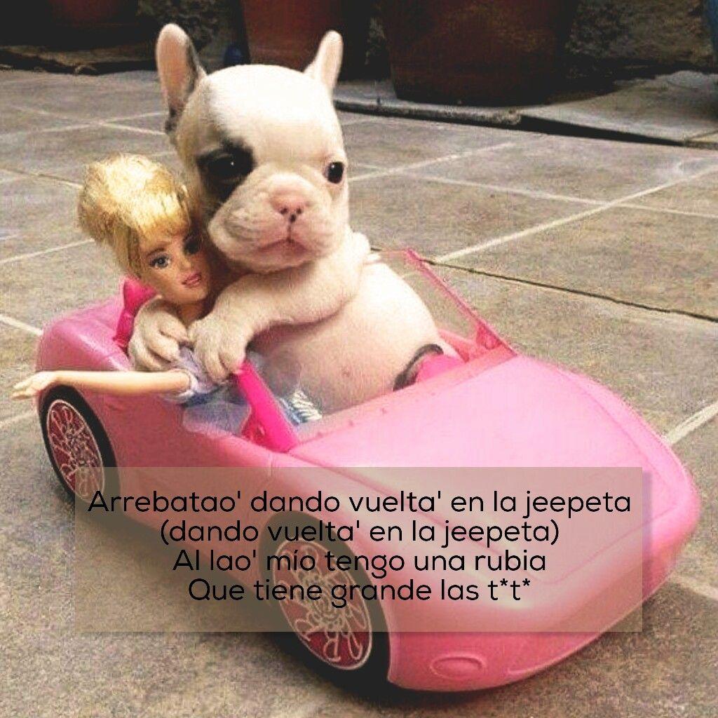 Memes Divertidos French Bulldog Bulldog Animals