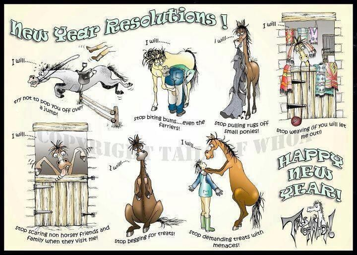 Horse New Years Resolution | Horse Funnies :) | Pinterest | Horse ...